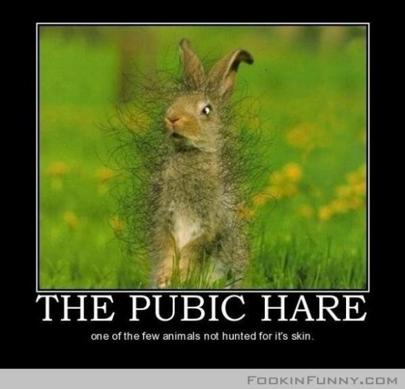 pubic hare